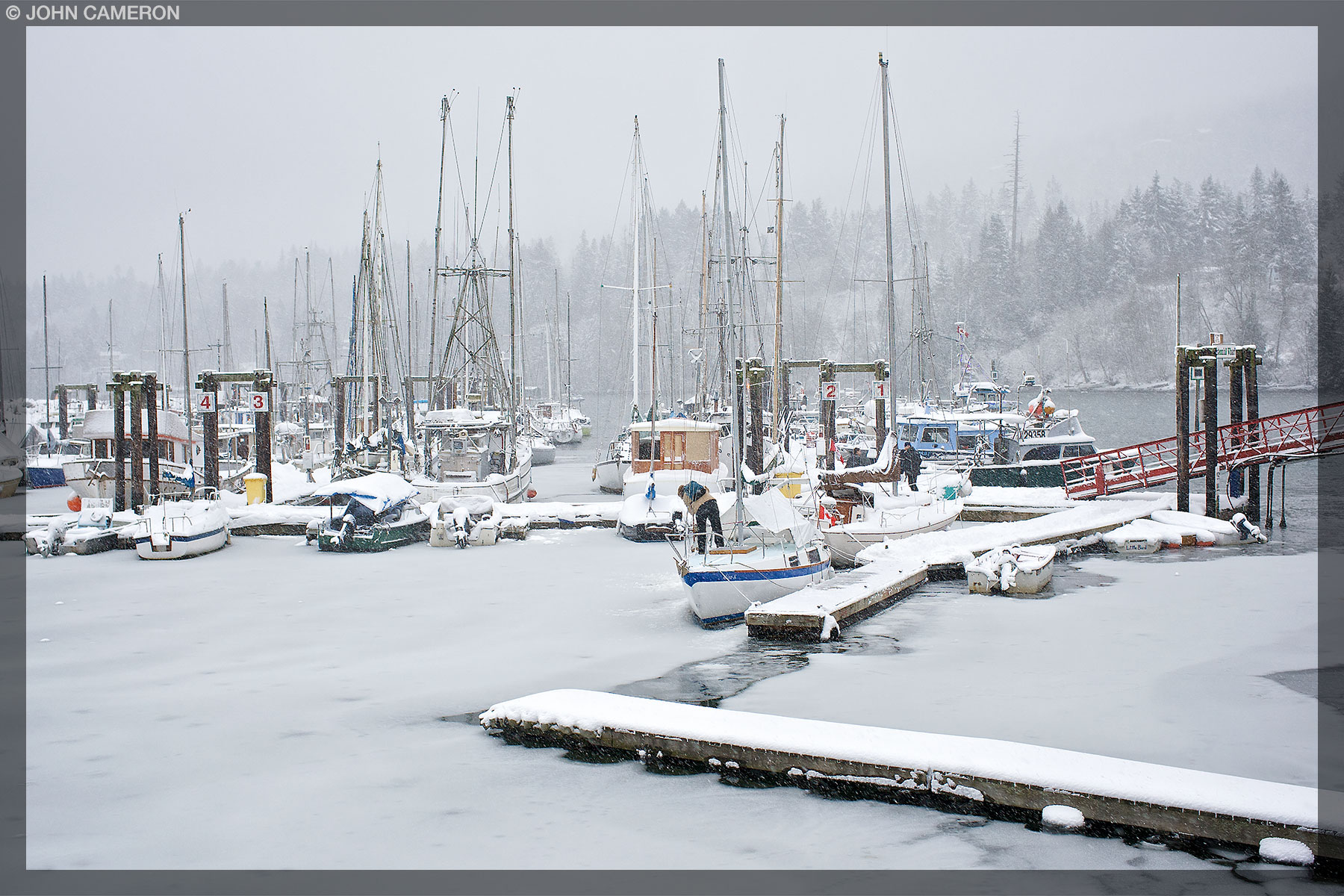 Snow on Salt Spring Island