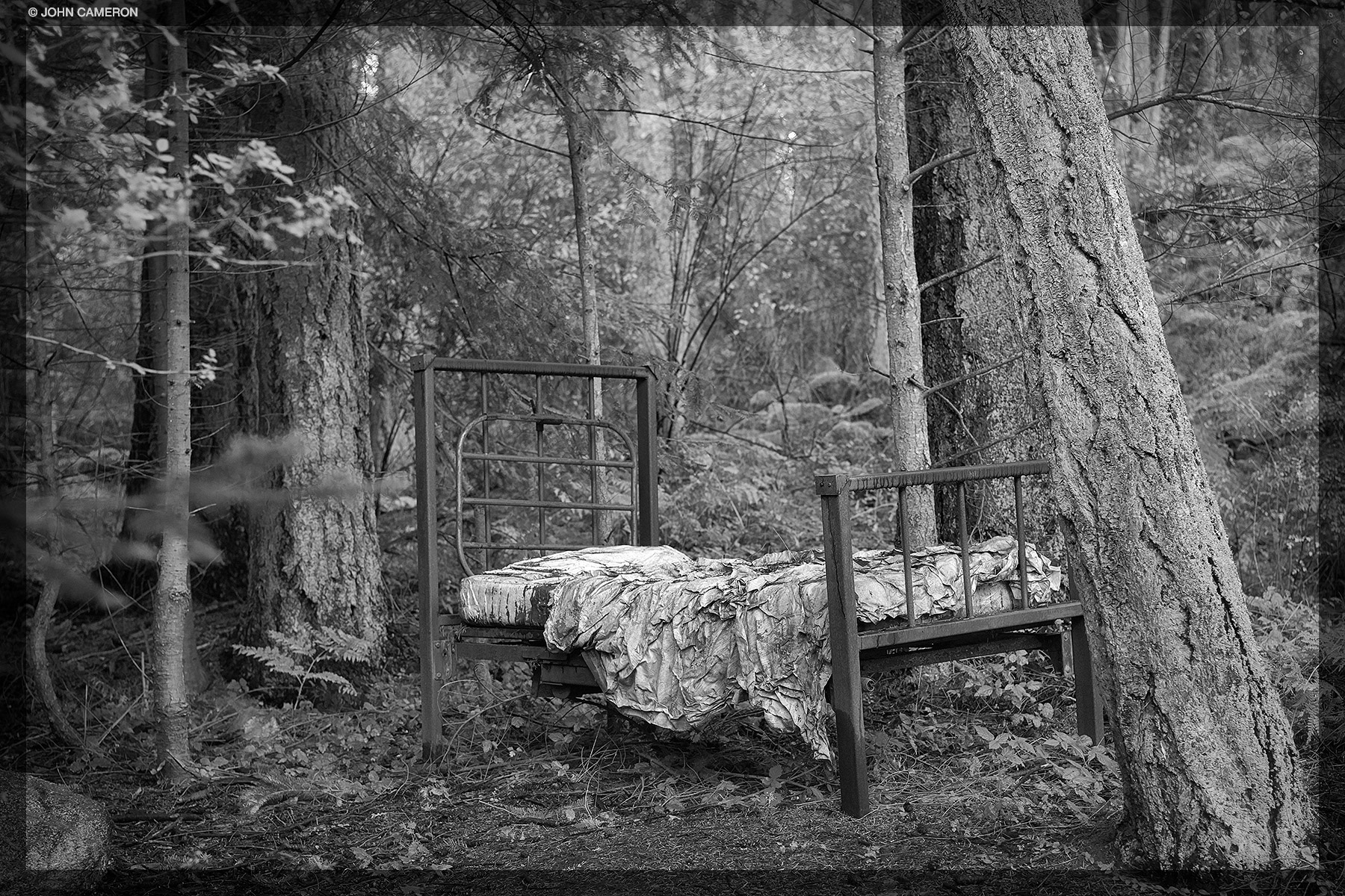 Bed in the Woods