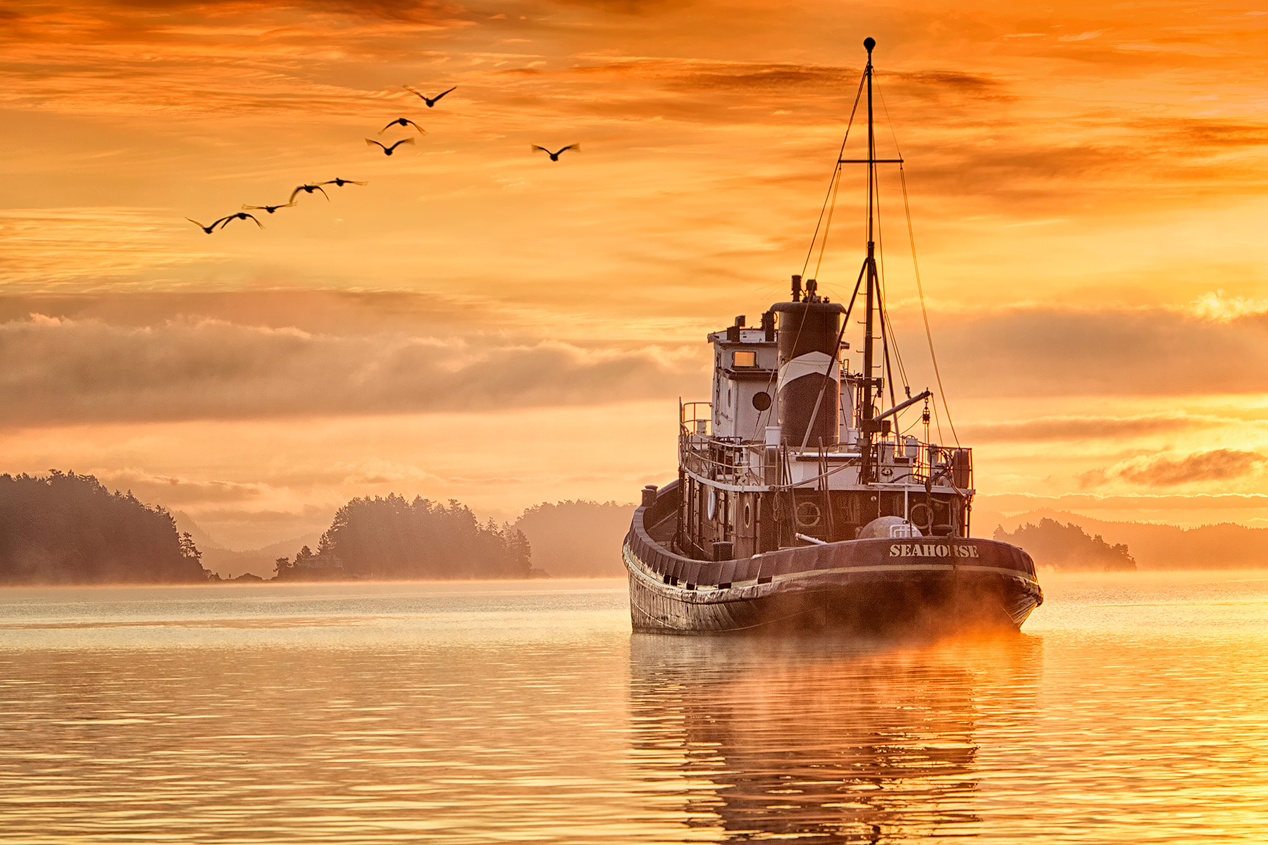 Seahorse Tug in Ganges Harbour Sunrise with Canada Geese