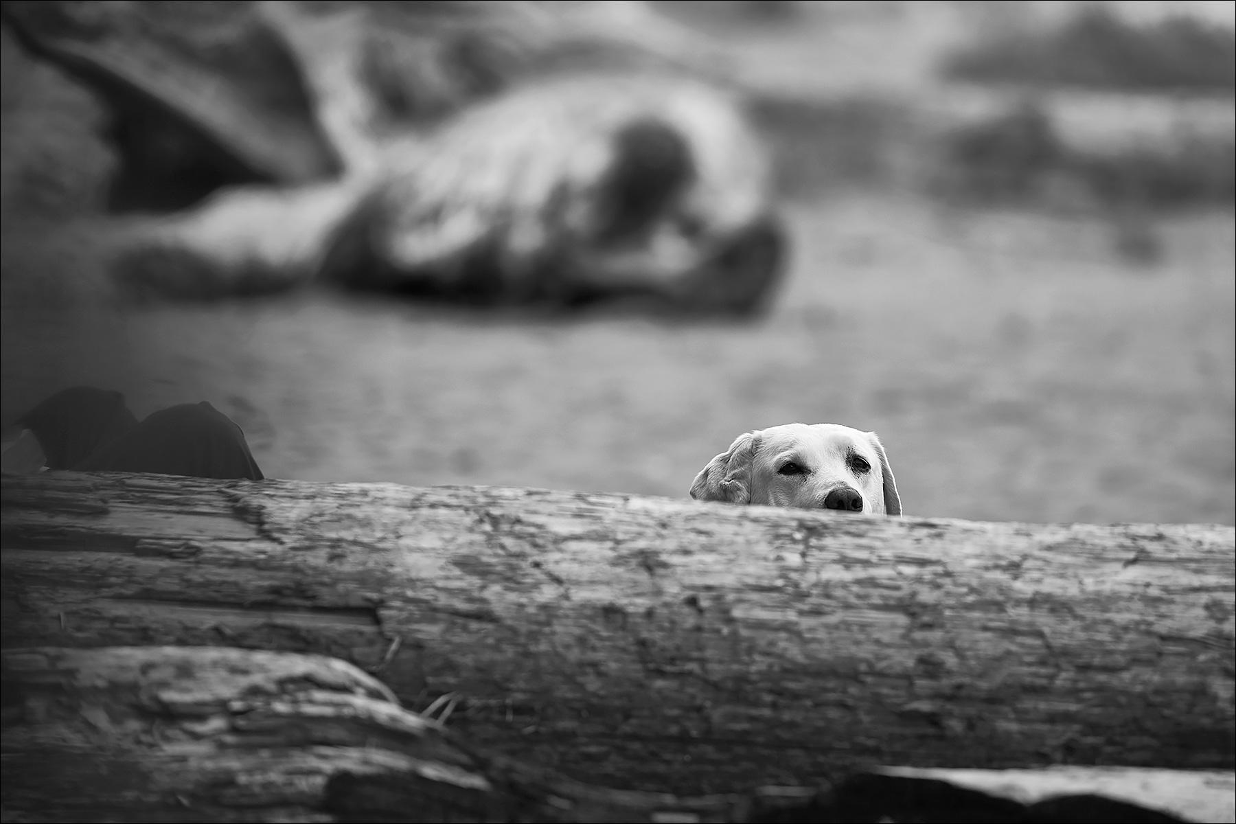 People Watching ©johncameron.ca