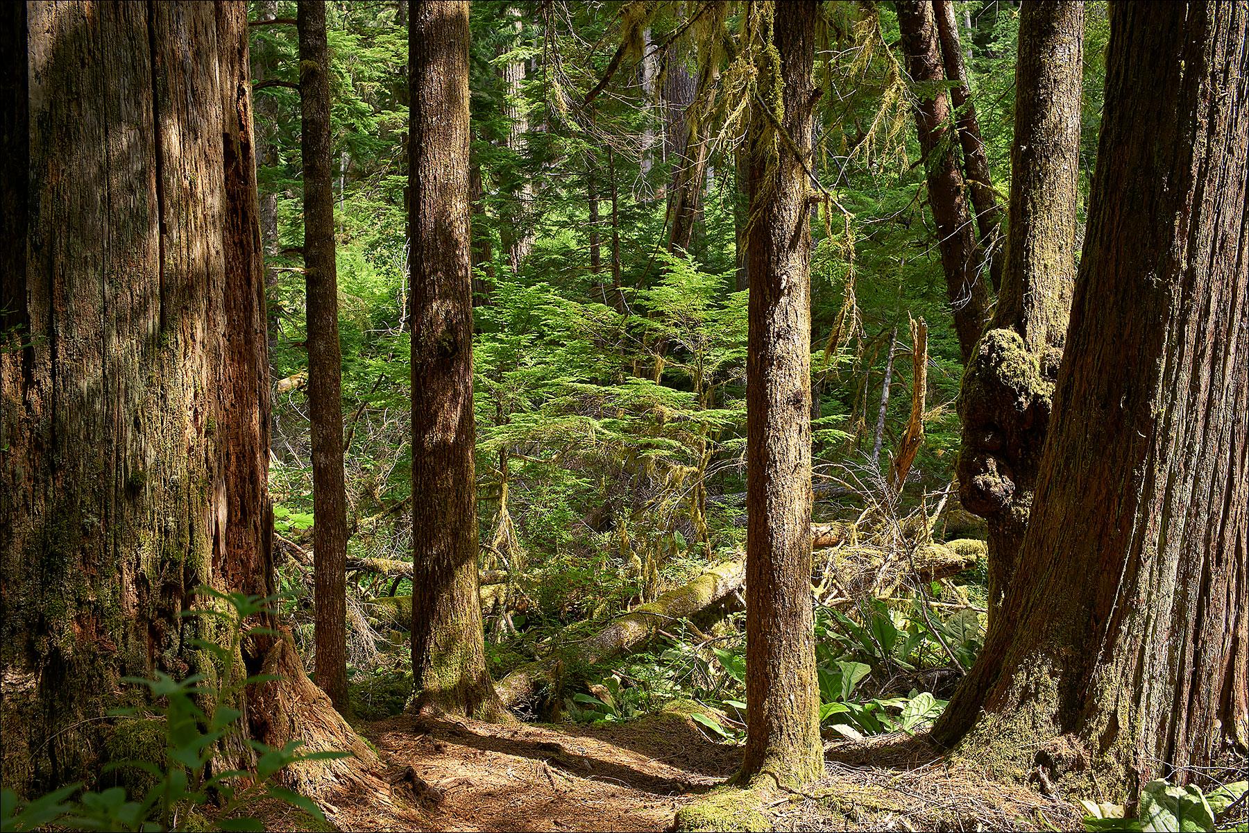 Antler Lake Loop Trail ©johncameron.ca
