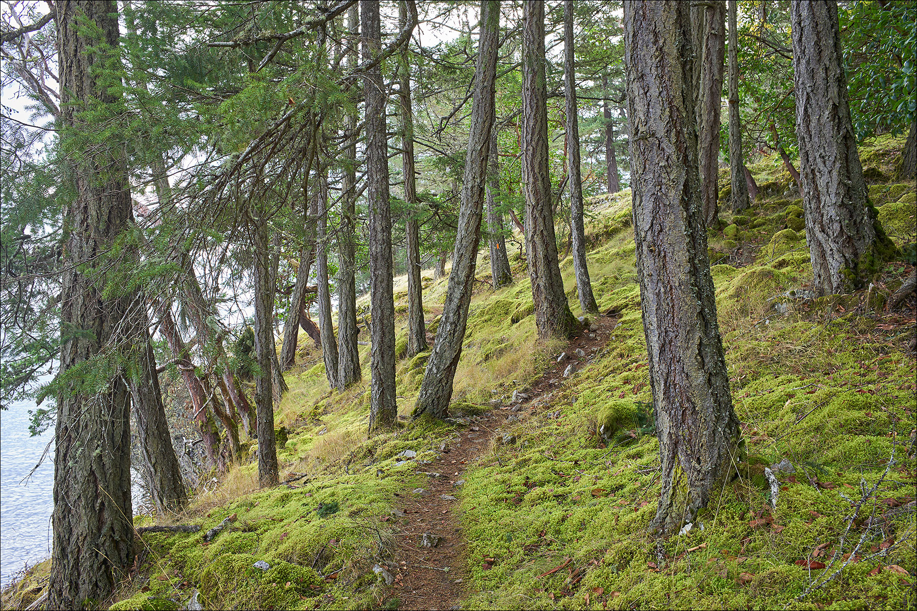 Hiking from Yeo Point to Kings Cove area ©johncameron.ca