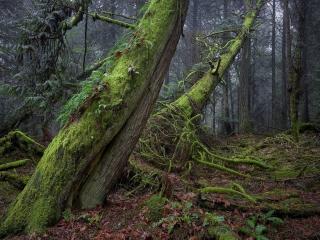 Winter Green ©johncameron.ca