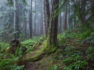 Rainforest Trail ©johncameron.ca