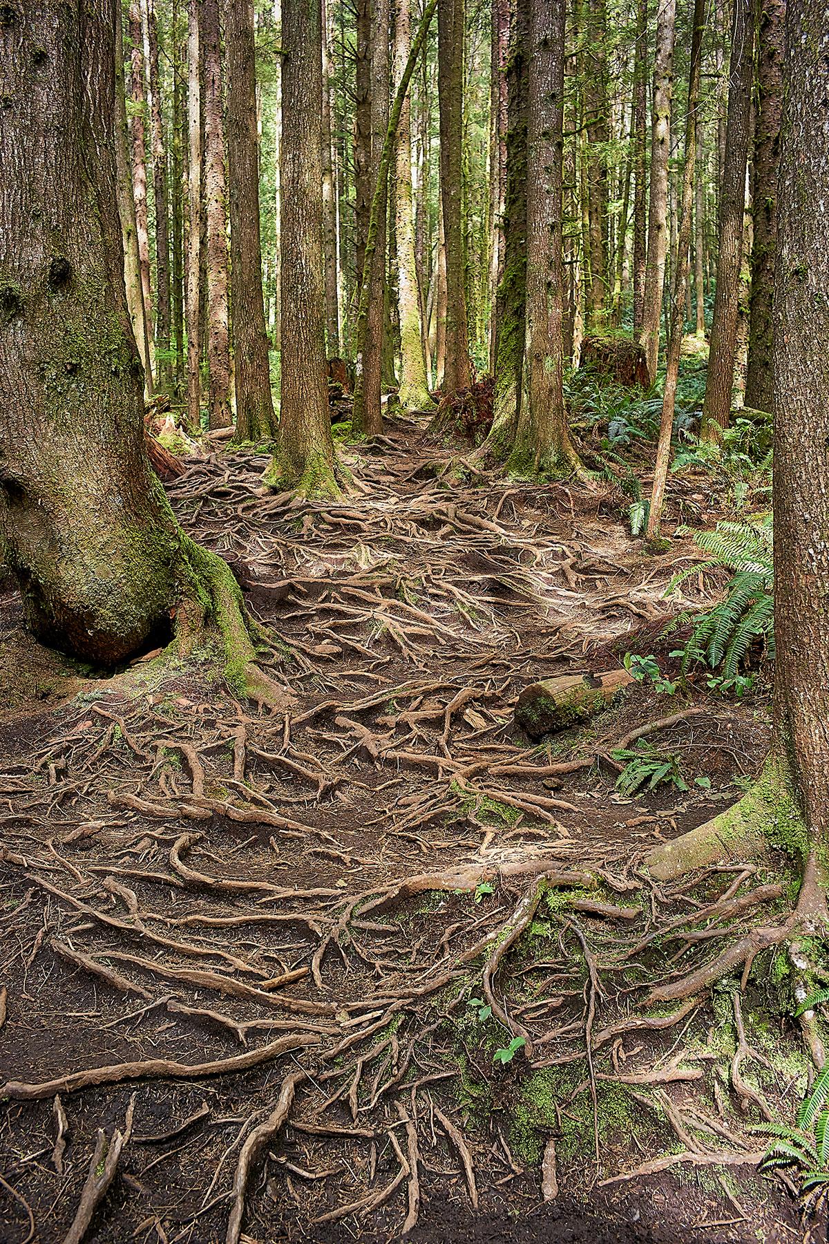 Juan-De-Fuca Trail © johncameron.ca