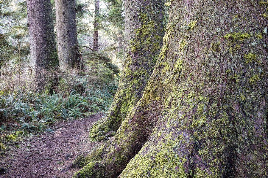 Spruce Trail ©johncameron.ca
